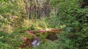 Den Bistrica floden i den Rila nationalparken eller kungliga personen Bistrica lökformig Fotografering för Bildbyråer
