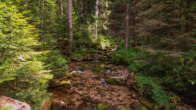 Den Bistrica floden i den Rila nationalparken lökformig Royaltyfri Bild