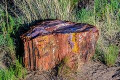 Den bländande samlingen av färger på ett prov i Arizona ` s förstenades skogen Royaltyfria Bilder