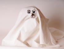 Den blåögda katten klädde som spöke i ark med slitsar för ögonen och näsan Royaltyfria Foton