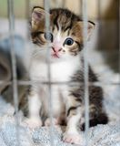 Den blåögda kattungen av en strimmig kattfärg stirrar i överraskning från caen fotografering för bildbyråer
