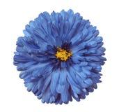 Den blåa blomman, vit isolerade bakgrund med den snabba banan closeup arkivfoton