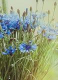 Den blåa buketten av blåklint blommar med bokeh- och kopieringsutrymme, blom- abstrakt bakgrund Sommarblombegrepp lantligt Royaltyfria Bilder