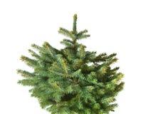 den blåa julen spruce treen Arkivfoton