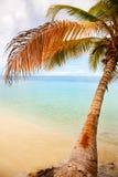 den blåa karibiska kokosnöten gömma i handflatan skyen under Royaltyfri Bild