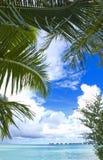 den blåa kokosnöten gömma i handflatan havet Royaltyfri Fotografi