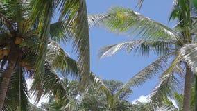 den blåa kokosnöten gömma i handflatan skyen arkivfilmer