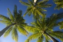 den blåa kokosnöten gömma i handflatan skytrees arkivbild