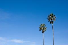 den blåa kopian gömma i handflatan skyavståndstreen Arkivfoto