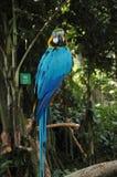 Den blåa papegojan i zoo royaltyfria bilder