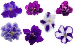 den blåa samlingen blommar violeten Royaltyfri Foto