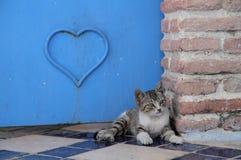 Den blåa staden av Chefchaouen Fotografering för Bildbyråer