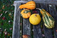 Den blandade apelsinen, gräsplan och gula dekorativa kalebasser på lantligt är arkivfoto
