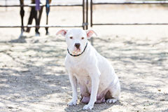 Den blandade avelhunden gav precis födelse Royaltyfri Foto