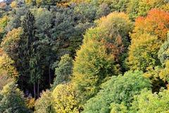 Den blandade skogen på nedgången i hltal natur för Altmà ¼ parkerar Arkivfoton