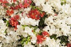 Blom- bakgrund för härlig natur Royaltyfri Foto