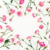 Den blom- runda ramen med rosa rosor, förgrena sig och sidor på vit bakgrund red steg Lekmanna- lägenhet, bästa sikt Arkivbilder