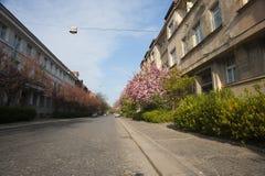 Den blommande gatan i vår med blått gör klar himmel Royaltyfri Fotografi