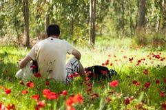 Den blommande vallmofarsan med dotteranemoner blomstrar i Israel Fotografering för Bildbyråer
