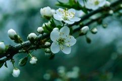 den blomstra dagträdgården kan spring soligt Arkivfoto