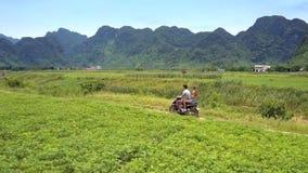 Den blonda flickan och grabben rider sparkcykeln längs flodforntidsfält lager videofilmer