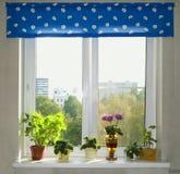 An den Blumen eines Fensterstandplatzes Lizenzfreie Stockfotos