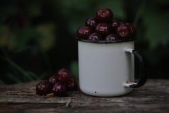 Den Bordea körsbäret i emaljerat rånar Royaltyfria Foton