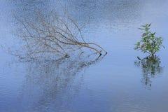 Den bosatta gräsplanen och den döda bruna växten Royaltyfria Bilder