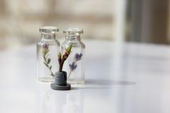 Den bosatta växten mellan glasflaskor med växter på en vit ta Royaltyfri Fotografi