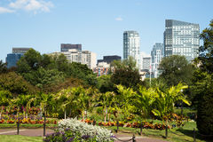 Den Boston allmänningen parkerar trädgårdar med Boston horisont Arkivbilder