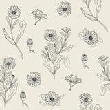 Den botaniska sömlösa modellen med den blommande calendulaväxten, snittblommahuvud och knoppar räcker utdraget med konturlinjer Royaltyfria Bilder