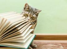Den brittiska Grey Cat luktar den öppna boken, roligt husdjur på det Wood golvet Royaltyfri Bild
