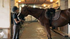 Den bruna hästen får lovingly skrapade vid en kvinnlig ryttare lager videofilmer