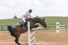 Den bruna hästen rycker loss ett hinder Royaltyfri Fotografi