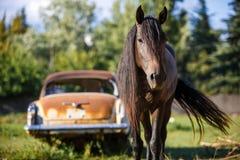 Den bruna hästen ser in i ramen, går att möta royaltyfri fotografi