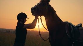 Den bruna hästen sniffar dess kvinnliga ryttare i solnedgången arkivfilmer