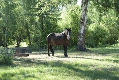 Den bruna hästen står bland träden Royaltyfri Bild