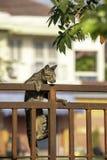 Den bruna katten klättrar staketjärnrosten arkivfoton