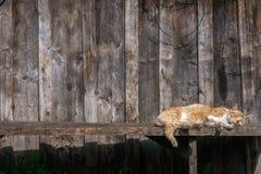 Den bruna katten kopplar av under solen arkivfoton