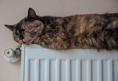 Den bruna katten ligger på batteriet på en kall dag Arkivbilder