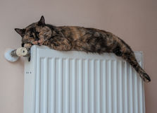 Den bruna katten ligger på batteriet på en kall dag Royaltyfria Foton