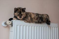 Den bruna katten ligger på batteriet på en kall dag Royaltyfria Bilder