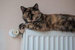 Den bruna katten ligger på batteriet på en kall dag Arkivbild