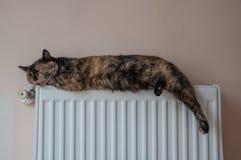 Den bruna katten ligger på batteriet på en kall dag Royaltyfri Fotografi