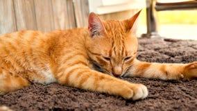 Den bruna katten ligger på matta Arkivbilder