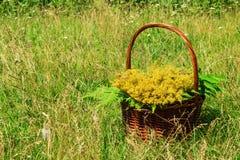 Den bruna korgen med gula vildblommor och sidor av ormbunken på en bakgrund av ett grönt gräs Royaltyfri Bild