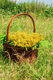 Den bruna korgen med gula vildblommor och sidor av ormbunken på en bakgrund av ett grönt gräs Arkivfoton