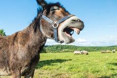 Den bruna kulöra åsnan poserar med att skratta framsidan royaltyfria bilder