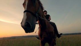Den bruna stoen får riden av en kvinnlig ryttare över ett öppet fält lager videofilmer