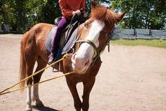 Den bruna stoen har tygeln som rider barn i ranch royaltyfria bilder